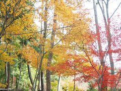 鶏足寺(旧飯福寺)の紅葉 12:15頃  己高閣・世代閣から歩いて10分ほどで鶏足寺に到着。