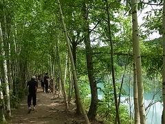 旭岳温泉を下り、十勝岳方面の白金のほうに向かいます。 ここには有名な、青い池があります。 池のほとりに遊歩道があります。