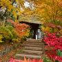 2017紅葉(12)「石の寺」教林坊の紅葉・落葉と庭園