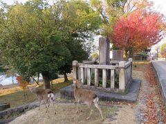 鹿は猿沢池のほうへ下りていったので、ばいばい 朝の散歩に付き合ってくれて、ありがとう♪