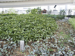 キリンビール横浜工場がある場所は「生麦」。 生麦事件があった地です。 生麦事件とは幕末の薩摩藩士によるイギリス人殺傷事件。 工場前には「生麦事件井戸跡の碑」がありました。