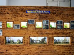 黒潮の森マングローブパークのマングローブ館で奄美大島の自然とマングローブ原生林でのカヌーについてのビデを視聴。