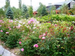 今は10月、バラなんて咲いてるかな~と思いきや、昨日までイベントもやっていたくらいまだまだ咲いているようです。  と言っても、咲き誇っている、とまではいきませんが、なかなかバラ園まで足を運んだことがないという方がほとんどだったので、特に女性陣は喜んでいた様子。  ★いわみざわバラ公園★ グリーンランドのすぐお隣  http://www.iwamizawa-park.com/rose-garden/