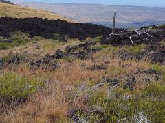 Chain of Craters Road(火口の連鎖道路)は海岸まで下っていますが、私達は途中で引き返しました。  数箇所の展望台で休憩しましたが、この写真は私たちが引き返した場所(多分、標高600m程度)で撮影。 遠くの海岸方向に道路(チェーン・オブ・クレーターズ。ロード)が見えます。 近くの木が枯れたのは溶岩流によるものだと思います。