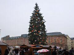 Place Kléber(クレーベル広場)の巨大なクリスマスツリー。