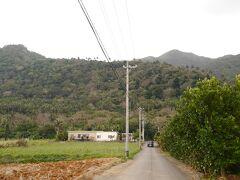 10:30 米原ヤエヤマヤシ群落へ。 ここから見てもヤシが結構見えることに、帰りに気付きました!