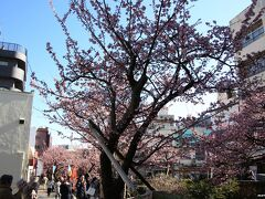 糸川沿いの桜並木 14:00頃  来宮神社から糸川に沿って宮坂を下り、 本町商店街まで来ると300mほどの糸川遊歩道に58本の熱海桜が植えられています。 この時間になると、糸川上流の桜は日陰になってしまいます。