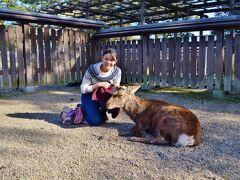 奈良と言えば!と言うほど奈良の代名詞である鹿。 市街地の方にはあまり出てこないみたいで、興福寺境内で初お目見えです。
