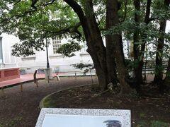 開港資料館。中庭にあるたまくすの木は、有名なペリー上陸の絵にも載っています。