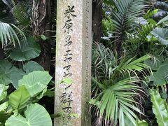 その後、川平湾に向かう途中、 米原のヤエヤマヤシ群落に寄ってみました。