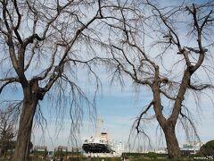 山下公園の枝垂れ桜と氷川丸  山下公園で有名な枝垂れ桜、まだ蕾も膨らんでいませんでした。 今年の桜の開花予想は、平年よりも早いとか。 3月中に満開になるのでしょうか?  このあと、大さん橋ホールで開催中のCP+の写真展に向かいました。  (おしまい)