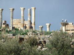 神殿 ゼウスを祀るキャピトル  柱の上には野生のコウノトリが巣に2羽もいました