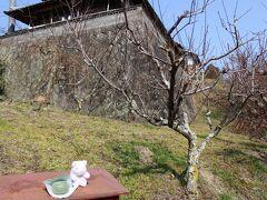 2月の最終土曜日~まず梅見目的でバスツアーに参加し、奈良・月ヶ瀬にやって来ました・・ アレレ・・梅が、一つも咲いていません・・(苦笑) 周辺のお店は営業していて、焼き立てのよもぎ餅(@120円)を買いました。