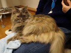 電車に乗り、心斎橋のアメリカ村へ。いつも行くお決まりの猫カフェcat tail。  長女はホールでコムギちゃんと^ - ^。  オーナーさん撮影♪。