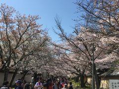 醍醐寺の桜には、国内外から多くの人が集まります