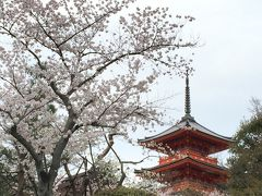清水寺は特に桜の名所ではありませんが、ライトアップもあり夕暮れから訪れても良いでしょう  ただし、当分は工事のシートなどが写真的には邪魔