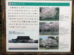 京都御苑は種類が多いので、順番に満開になっていくため、長い時期楽しめます