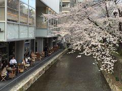三条の高瀬川にあるイタリアンレストラン「サルバトーレ」のあたりは桜が川面に映ったり、落ちた花が流れたりと綺麗な場所です  疲れた時は、お店でランチやディナーも良いかもしれません