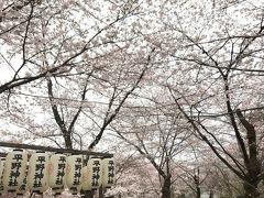 平野神社はそんなに広くない境内ですが、桜の密度が高いです