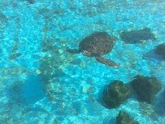 瀬底島にはモーニング食べれるお店がネットで探してもどうしても見つけることができず・・・朝はコンビニで買って美ら海水族館へ。 亀やいるかゾーンは無料で見れます。 駐車場も無料。 海が見たかったので無料で満喫してきました。