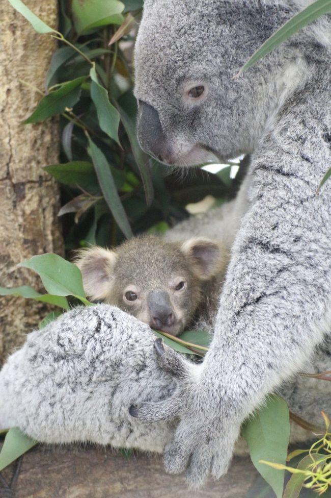 赤ちゃん大集合の春の埼玉こども動物自然公園(午後編)ねばった