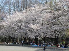 林試の森公園の桜並木は満開でした。
