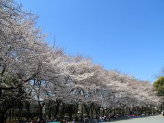 日曜日なので桜並木の下には大勢の花見客