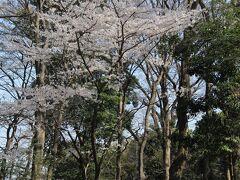 すずめのお宿緑地公園にも数本の桜が咲いていました。