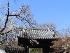 立会川緑道の桜並木から円融寺に立ち寄りました。