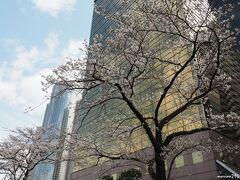 隅田川 吾妻橋袂の桜  黄金色に輝くアサヒビール吾妻橋ビルをバックに。