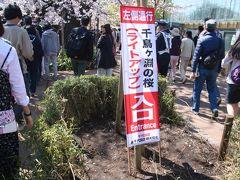ライトアップも来てみたいんだよなぁ。 友人トラベラーさんの旅行記の写真が4travelの「東京のおすすめお花見スポット10」でフューチャーされました(*^ー゚)b グッジョブ!!
