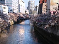 都営三田線に乗って目黒川へやってきました。 もう西陽が差してきました。