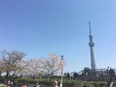 東京スカイツリーもクッキリ。
