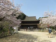 長府の国宝、功山寺。本当はこちらを先に訪問した。功山寺は別に詳しく紹介しているので、今回は桜中心。