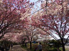その後10分ほど住宅街を歩くと、宇喜田公園に到着。