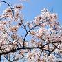 2018年:春:神戸旅行1日目:『そうだ!花見に行こう!』とネエネ手作りお弁当を持参で2018年初!神戸まで行って花見に行く!(2泊3日)(家族4人+じいじ+ネエネ夫婦)