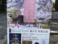 春はさくら、桜の三井寺にやってきました!