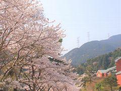 マイントピア別子に到着 ここは桜が満開