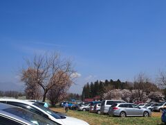新府桃源郷で散策していた方から山高神代桜も最高の桜でしたよ!とお聞きして。  韮崎から12キロ先の北杜市へ。 山高神代桜のPへと。(P代は400円)
