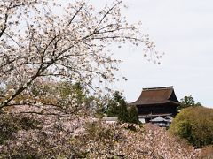 さて、お腹がいっぱいになったところで、吉水神社の一目千本へ向かう。  11時、吉水神社の階段下から蔵王堂を眺める。 このシチュエーション、桜満開なら最高だったのにな。  吉水神社 入山料 200円