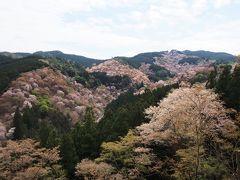 [世界遺産]吉水神社境内から観る一目千本!! ここからは中千本と上千本の桜を見渡すことができる。