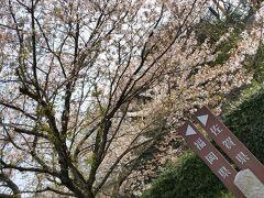 まずは基山でトイレ休憩。この桜は福岡の桜、でも枝が佐賀に延びてます。