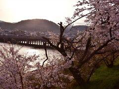 緑色の国鉄型車両103系を追いかける桜巡りの旅は、京都のお花見ポイントとしても有名な宇治橋の桜からスタートです ココは人気のお花見ポイントでありますが、当日は早朝に訪れたこともあって、この桜の絶景をしばし独り占めな状態でありましたねw
