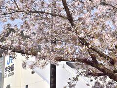 さて、JR宇治駅に戻りまして、桜巡りの旅を続けます JR奈良線のローカル列車に乗って・・・