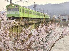 """さて、前置きはこのくらいにして(笑)、私流の""""鉄っちゃん""""寄りに偏った?桜巡りの旅の始まりでありますw 翌日早朝に訪れたのは、宇治川と満開な桜が見渡せるこんな場所"""