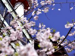 平年より開花がとても早い今年の桜は、関東地方のほうですと既に葉桜になっているところもチラホラと見受けられる状況であった中、当日の京都の桜は果たしてまだ残っているのかしら?と、ヤキモキしながら訪れたのですが、はてさて・・・