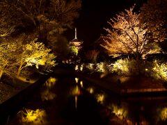 と、やって来ましたのは京都の夜桜ポイントとしても有名な、東寺の夜桜ライトアップ 夜の五重塔と桜との風景が実に幻想的であり、京都らしい夜桜を十分に満喫出来ました