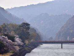そんな宇治橋からの残念な状況でありましたので、少しでも見栄えの良い桜の風景を探しては一枚パチリ☆して、宇治橋を後にしました