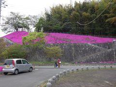 神武天皇が即位した「柏原」にある神武天皇社前の丘陵に咲く芝桜。