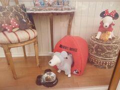 ホームストアのウィンドウ。  犬用のミキミニ服があるんですね!